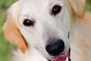hondengeur verwijderen met azijn